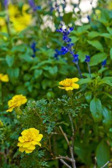 Free Blooms Royalty Free Stock Image - 6932426