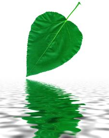 Free Green Leaf With Reflection In Water Stock Photos - 6932523