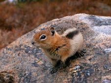 Free Cute Little Chipmunk Royalty Free Stock Photo - 6932835