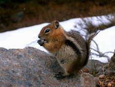 Free Cute Little Chipmunk Royalty Free Stock Images - 6932839
