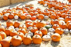 Free Pumpkin Patch Stock Photo - 6932870