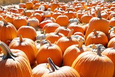 Free Pumpkin Patch Royalty Free Stock Photo - 6932955