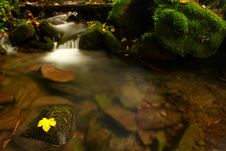 Free Leaf With Waterfall Stock Photos - 6933303