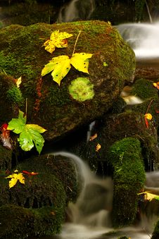 Free Leaf With Waterfall Stock Image - 6933321