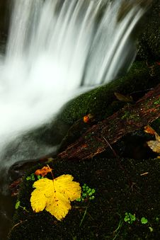 Free Leaf With Waterfall Stock Image - 6933371