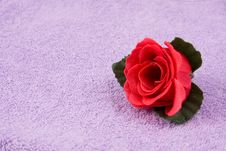 Free Scented  Rose Stock Photos - 6933523