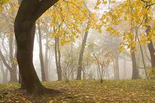 Free Autumn Park Stock Photo - 6933550