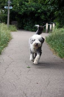 Free Dog Running Stock Photography - 6964242