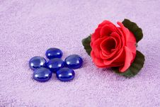 Free Aroma  Rose Stock Image - 6987231