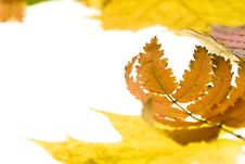 Free Autumn Leaves Stock Photo - 6999400
