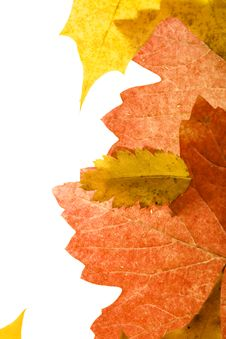 Free Autumn Leaves Royalty Free Stock Photo - 6999405