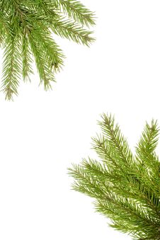 Free Fir Branch Royalty Free Stock Photography - 6999787