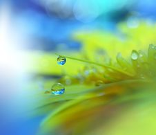 Free Beautiful Nature.Art Photography.Floral Fantasy Design.Colorful Abstract Macro,water Drops.Web Banner.Relaxation.Colors,blue. Royalty Free Stock Photo - 69932175