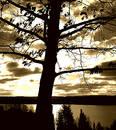 Free Tree Over Sun Royalty Free Stock Photos - 70608