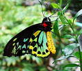 Free Butterfly Glory Stock Image - 78871