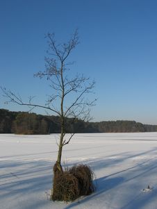 Free Winter Lake. Royalty Free Stock Photography - 70987