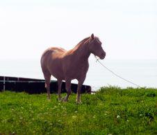 Free Horse Profile Stock Image - 71461