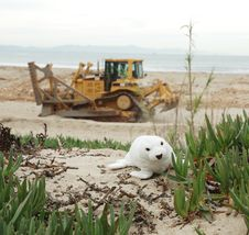Free Seal And Tractor Stock Photo - 72830
