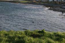 Free Irish Water Royalty Free Stock Photo - 73035