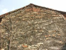 Free Old Barn Wall With Vine Stock Photo - 74690