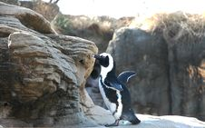 Free Penguin Stock Image - 74771