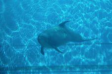 Free Dolphin III Stock Photos - 78653