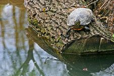 Free Turttle Stock Photo - 700100