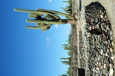 Free Cacti And Ruins Royalty Free Stock Image - 700356