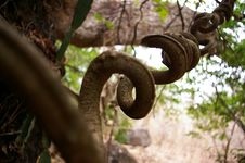 Free Twisting Vine Stock Photography - 700392
