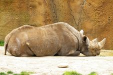 Free Sleeping Black Rhino Royalty Free Stock Photo - 701395