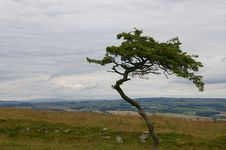 Free Scottish Tree Stock Photography - 701402