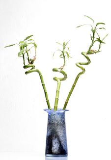 Free Three Bamboo Stock Photo - 702010