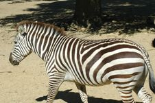Free Stripes Stock Images - 702274