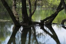 Free Lake And Forest Royalty Free Stock Image - 702396