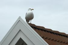 Free Seagull On Housetop Stock Photos - 703923