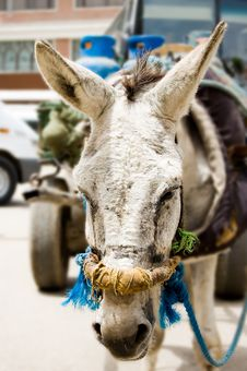 Free Donkey Closeup Royalty Free Stock Image - 703926