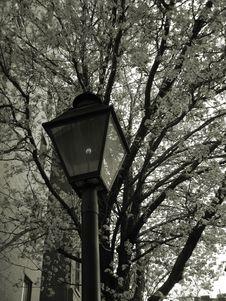 Free Lampost And Springtime Tree Stock Photo - 704790