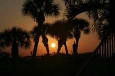 Free Palms At Sunset Stock Photography - 704832