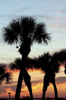 Free Palm Treetops At Sunset Royalty Free Stock Photography - 704857