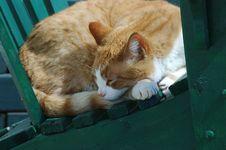 Free Sleeping Cat Stock Images - 705364
