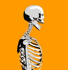 Free Bone 51 Stock Photos - 706903