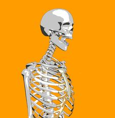 Free Bone 52 Royalty Free Stock Photo - 706905