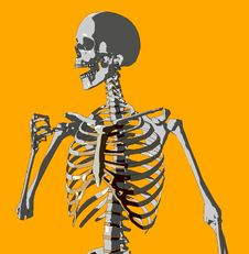 Free Bone 93 Royalty Free Stock Photos - 706918