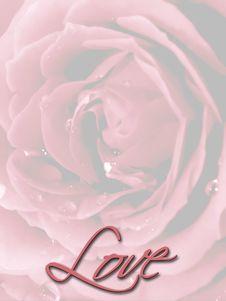 Free Rose Royalty Free Stock Photo - 708325