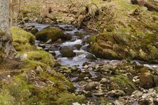 Free Mountain Stream Stock Photography - 708332