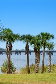 Free Palm Tree Riverbank Stock Image - 708861