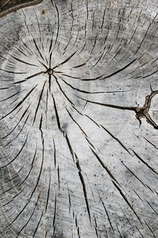 Free Tree Abstraction Stock Image - 709381