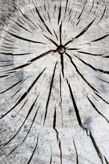 Free Tree Abstraction Stock Images - 709384