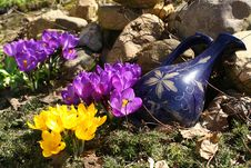 Free Spring Flowers In A Garden. Stock Photography - 709442