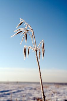 Free Hoar-frost Royalty Free Stock Photos - 709688